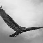 Stormhawks